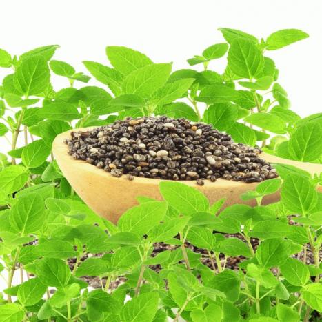 Zázračné semienko Chia (salvia hispanica)